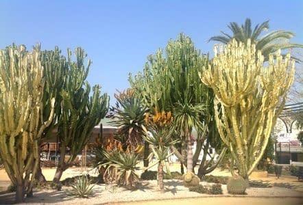 Beautiful cactus garden southern inland Spain.