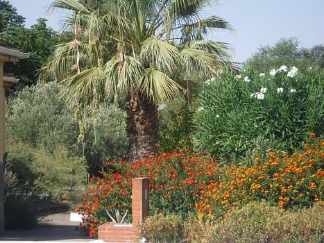 Rafa's palm tree.